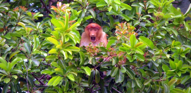 Monkey in Bako National Park, Kuching © MLVB