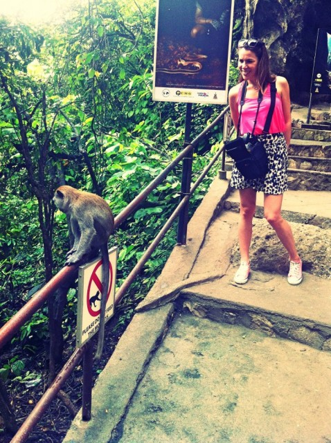 Monkey's at the Buta Caves